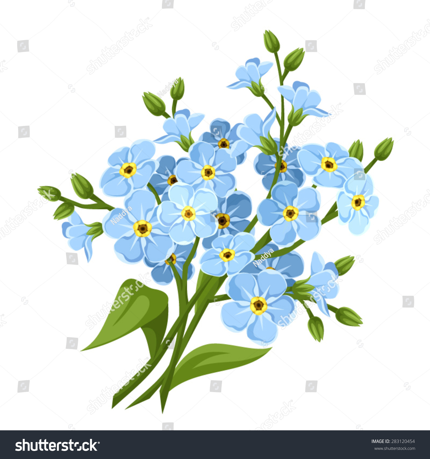 Vector Blue Forgetmenot Flowers Isolated On Stock Vector Royalty