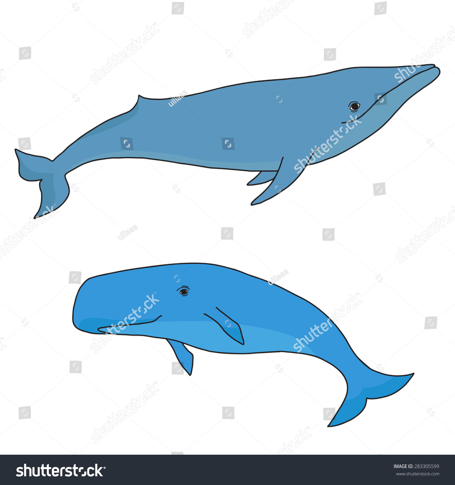 sperm-whale-sketch-drawing-gallery-indian-nude-girls