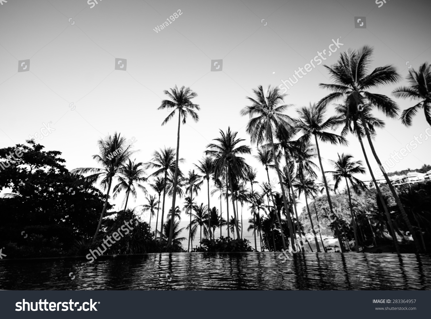 Black White Color Coconut Tree On Stock Photo Edit Now 283364957