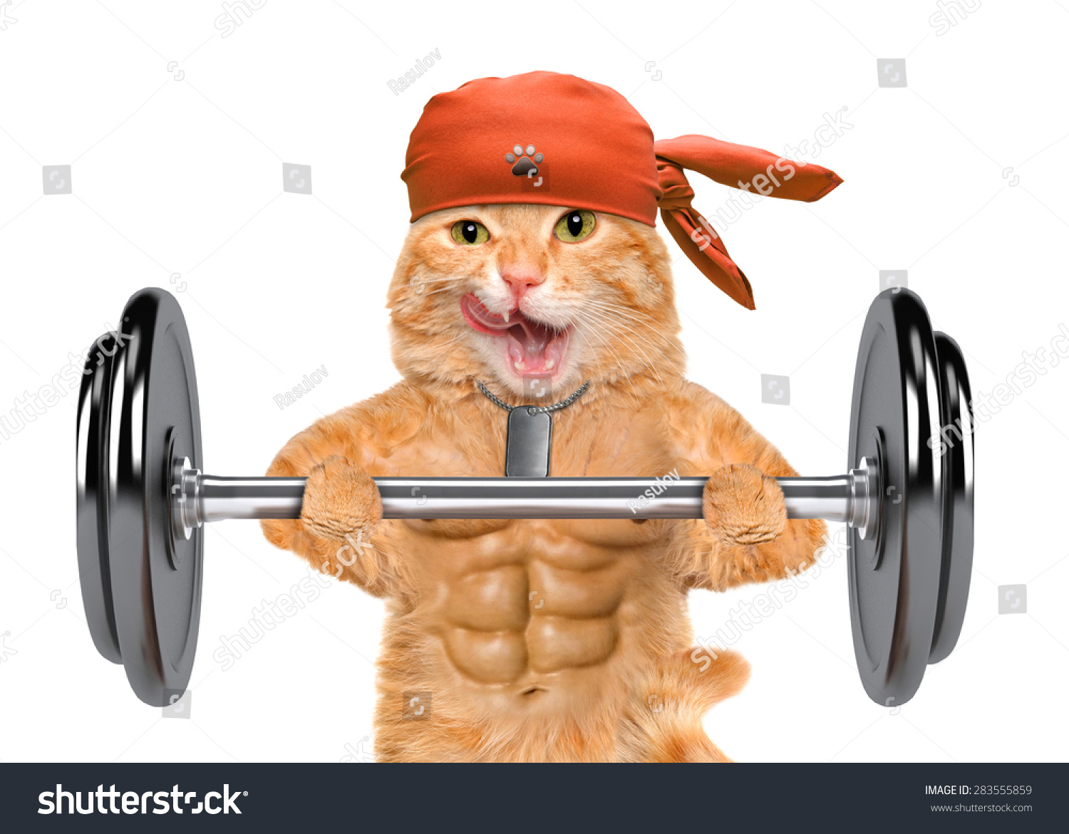Fitness cat lifting a heavy big dumbbell