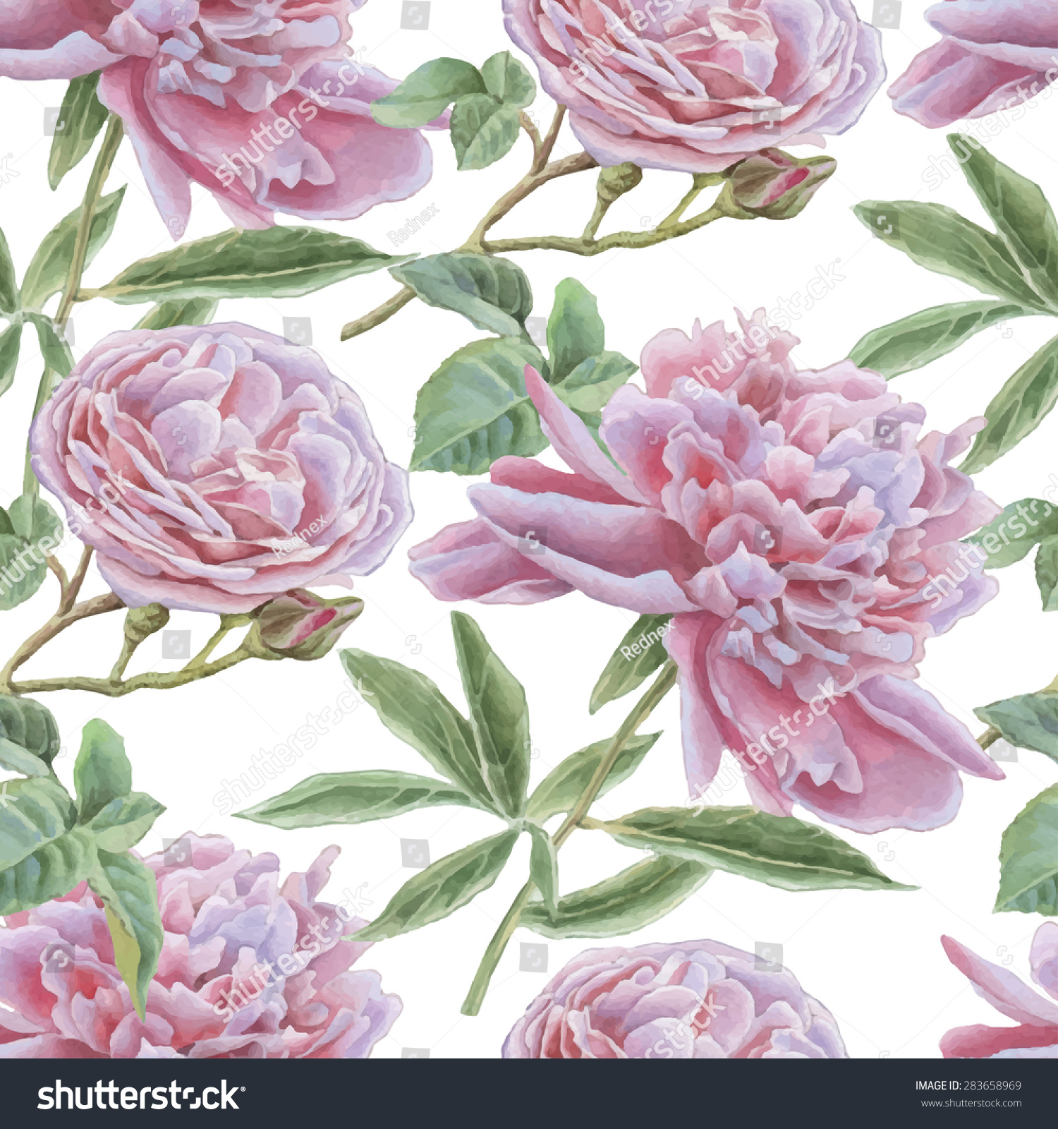 seamless pattern with rose and peony watercolor vector hand drawn - Garden Rose And Peony