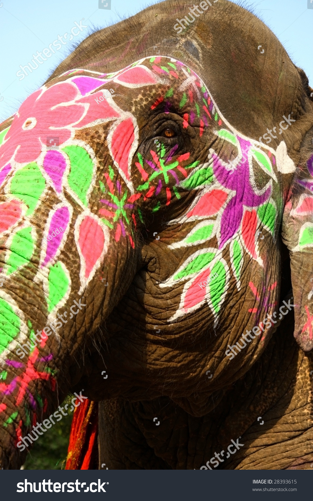 painted indian elephant face