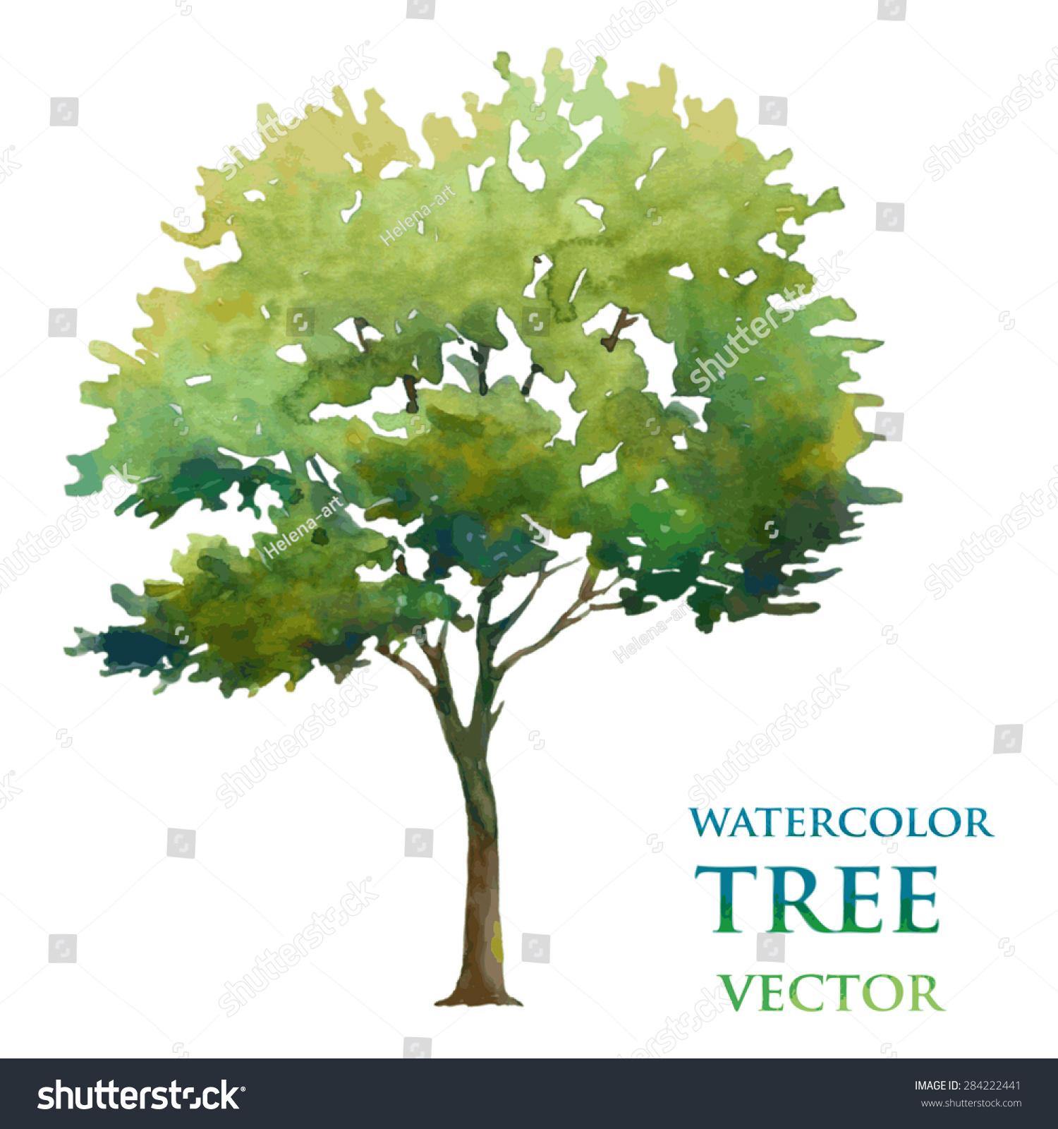 Watercolor Tree Stock Vector 284222441 Shutterstock