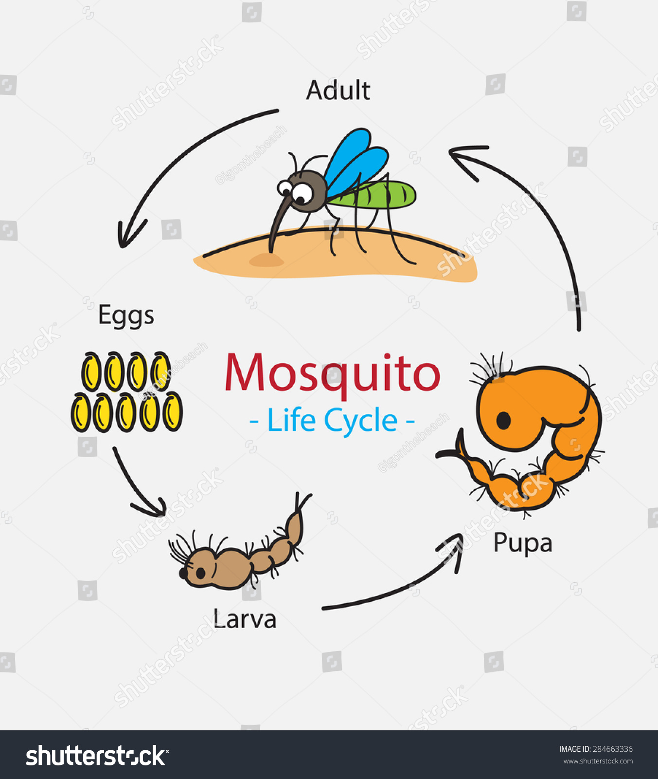 Mosquito Life Cycle Hand Drawn Concept Stock Vector Royalty Free