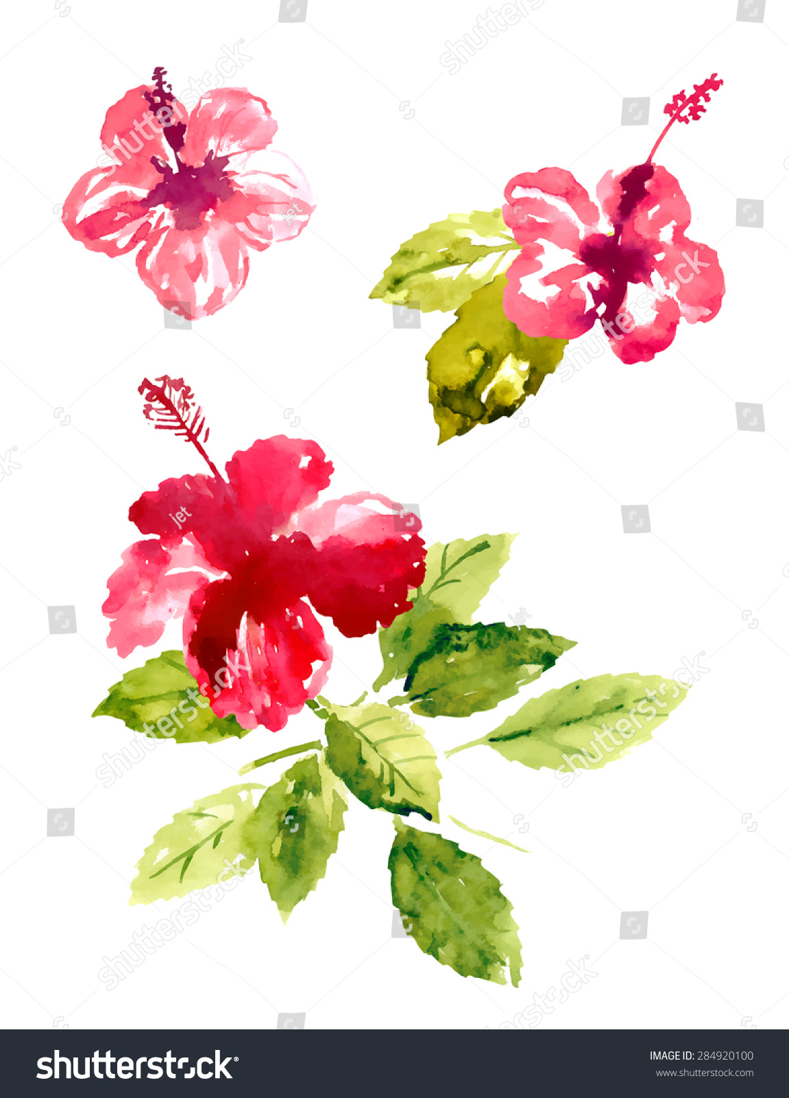 Set of red watercolor hibiscus flowers ez canvas id 284920100 izmirmasajfo
