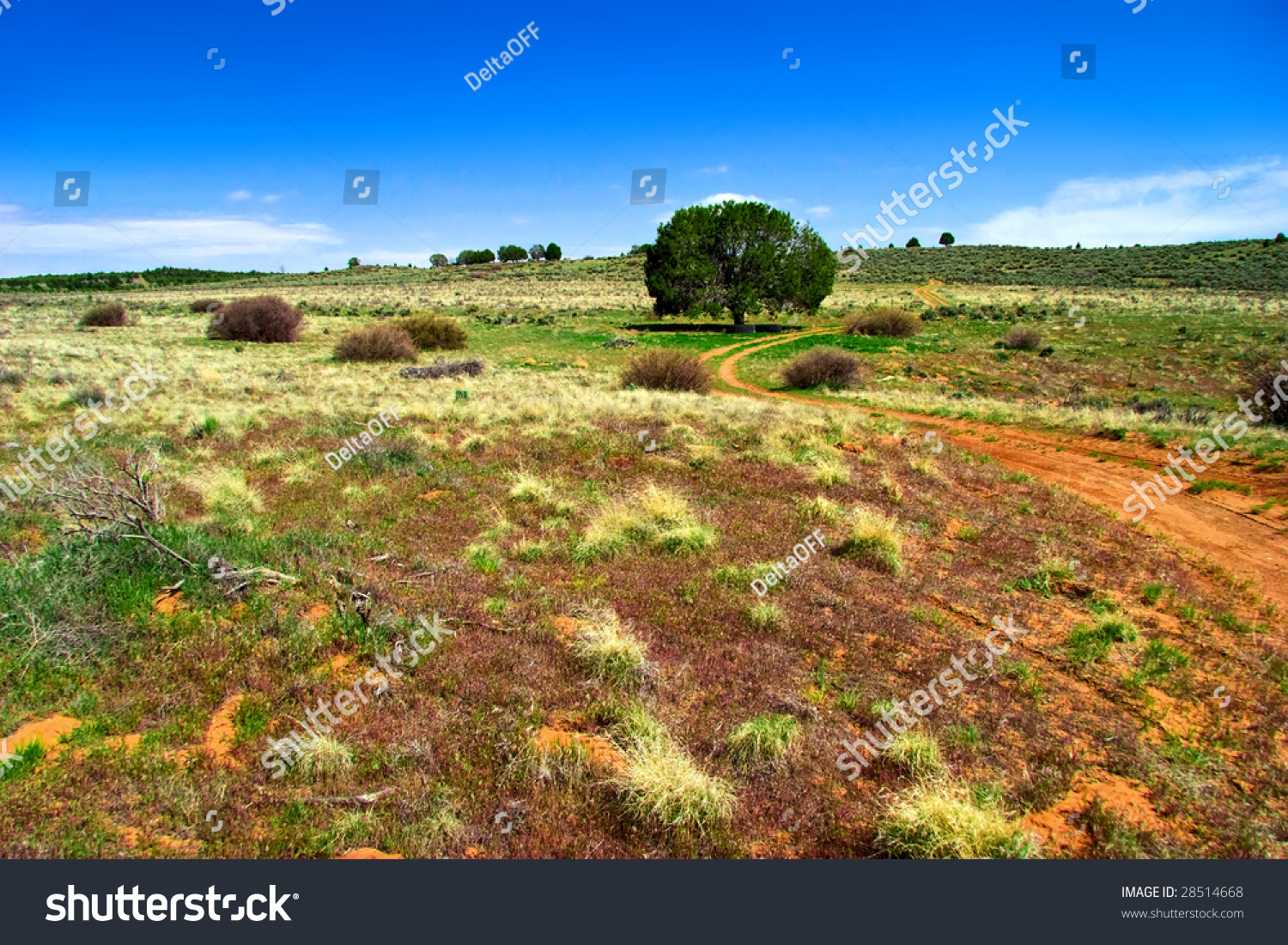 Lonely Tree Field Landscapes Utah State Stock Photo Edit Now 28514668