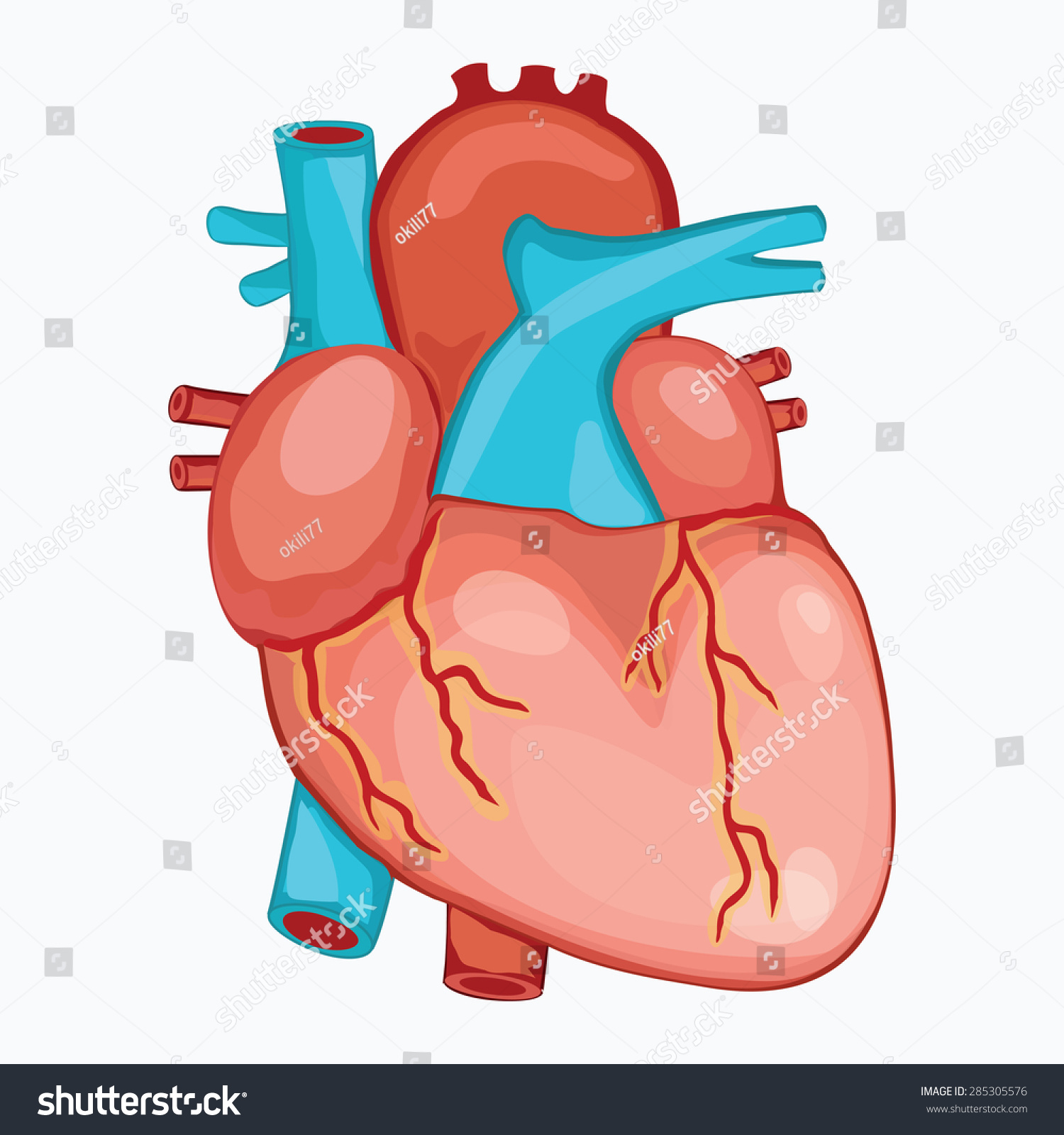 HUMAN HEART ANATOMY Illustration Vector Stock Vector (Royalty Free ...