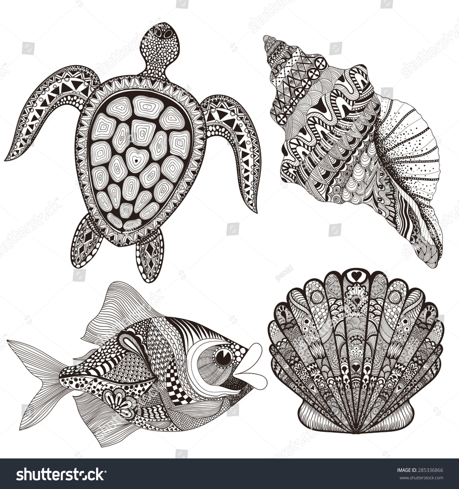 sea turtle shell drawing