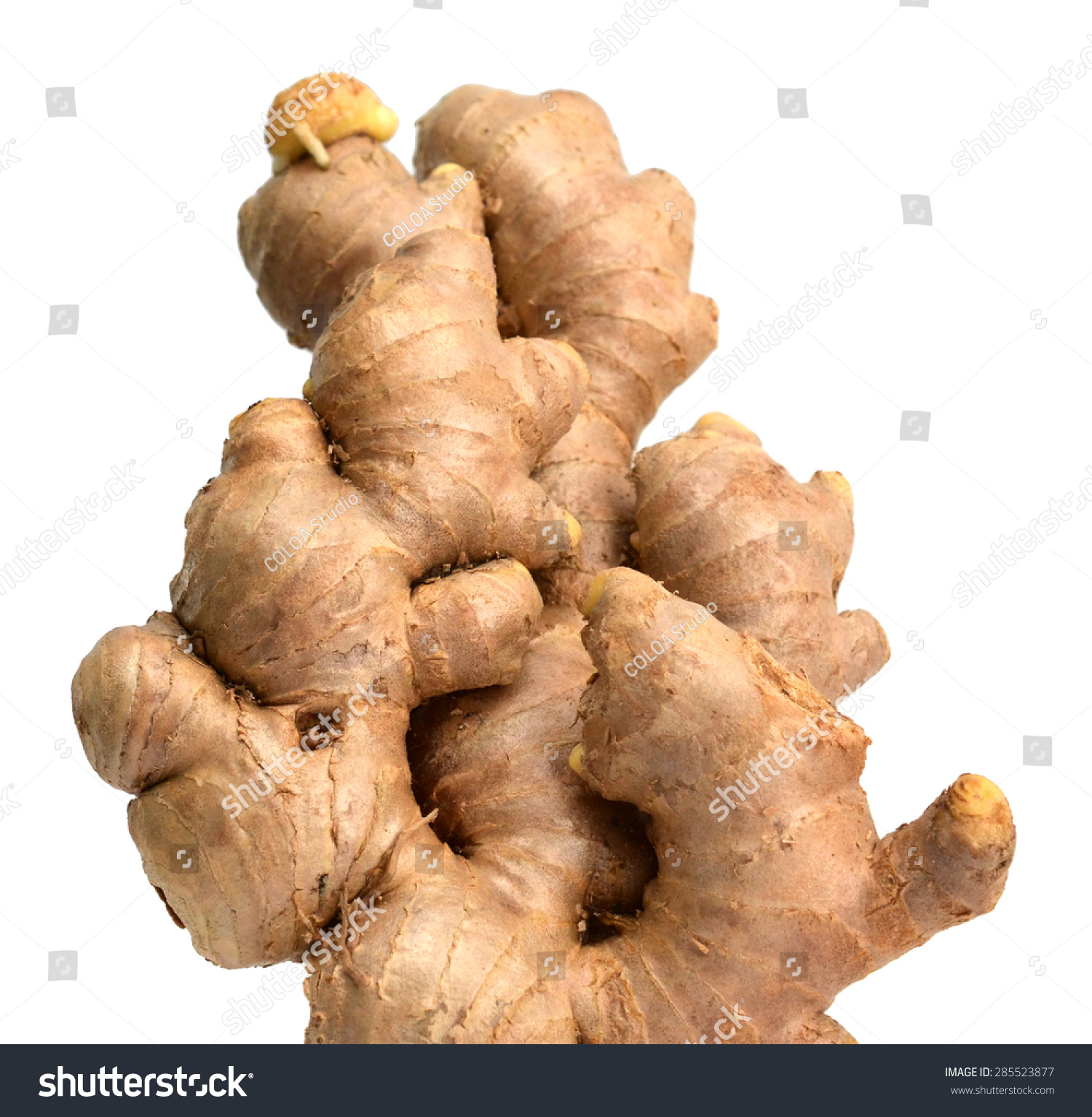 Asian Ginger Root Stock Photo Edit Now 285523877