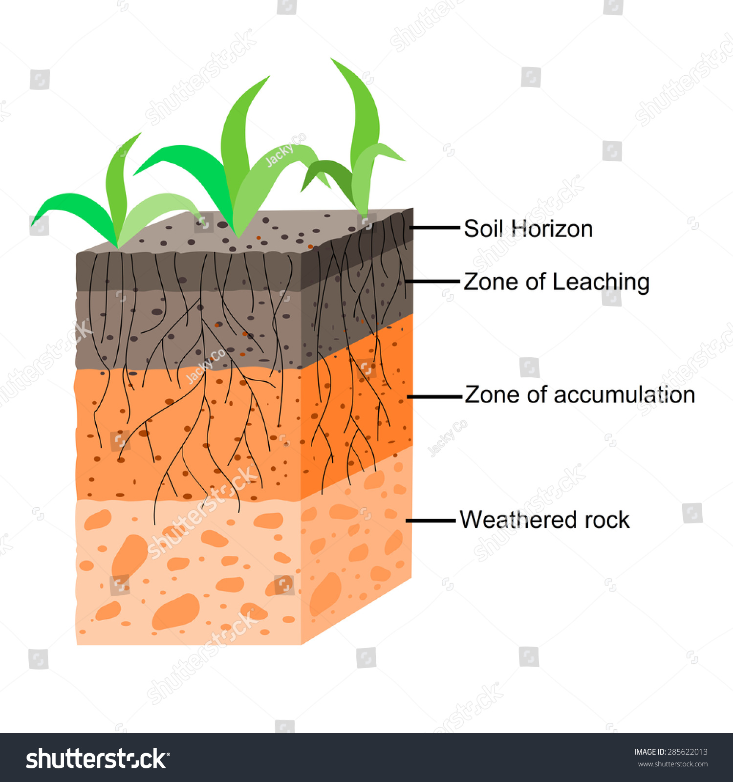 soil formation soil horizons stock vector 285622013 ... diagram of anatomy of lungs