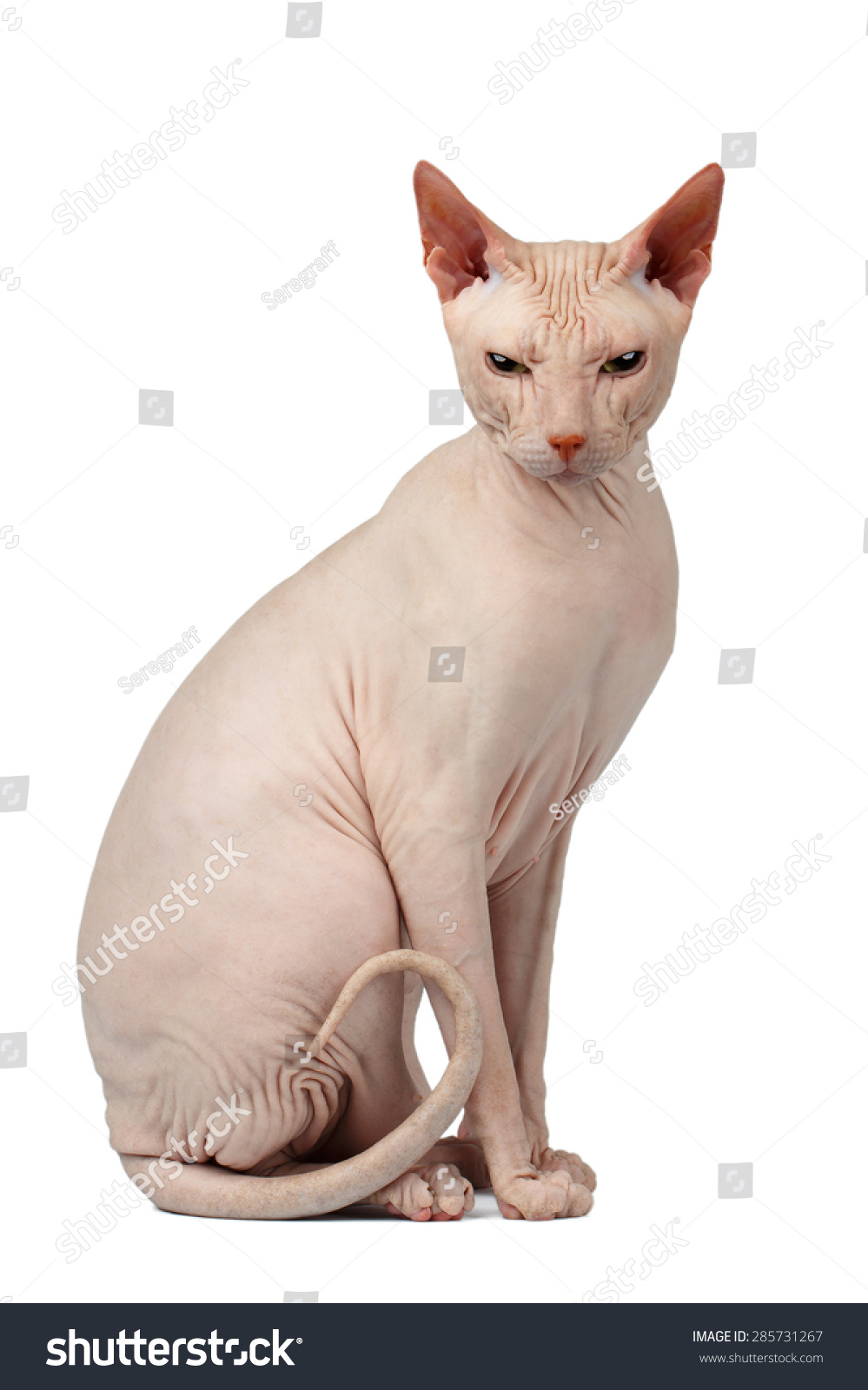 name for female cat