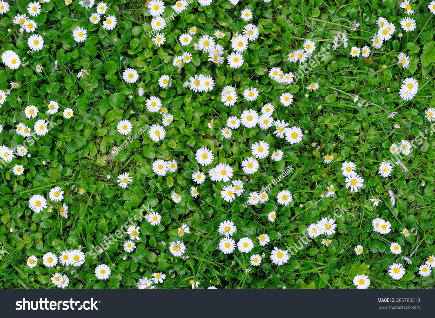 Spring green grass texture white small stock photo royalty free spring green grass texture with white small flowers mightylinksfo Choice Image