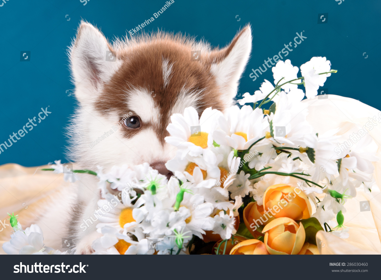 Funny Puppy Bouquet Flowers Wishes Happy Stock Photo Royalty Free