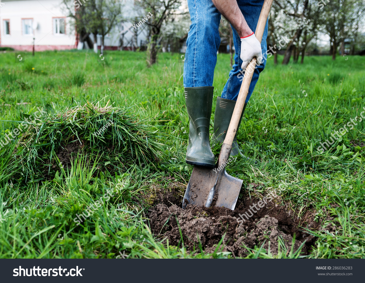 Man Digs Hole Ground Planting Trees Stock Photo 286036283 ...