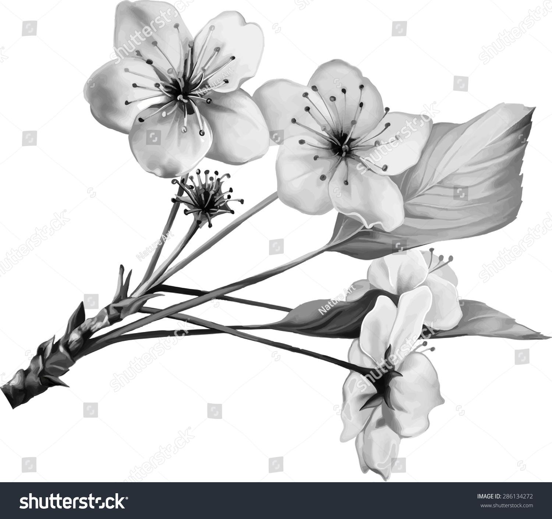 Black Tree And Flower Illustrations 108