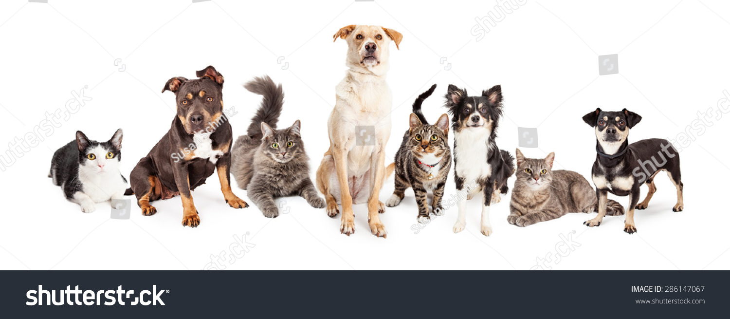 cats and dogs compare and contrast essay