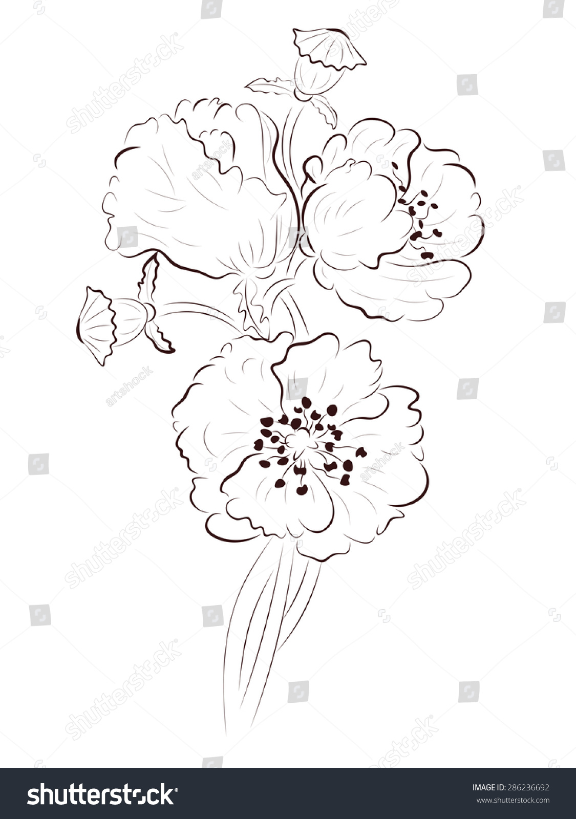 Hand drawing poppy flower simple line stock vector royalty free hand drawing poppy flower simple line art illustration mightylinksfo