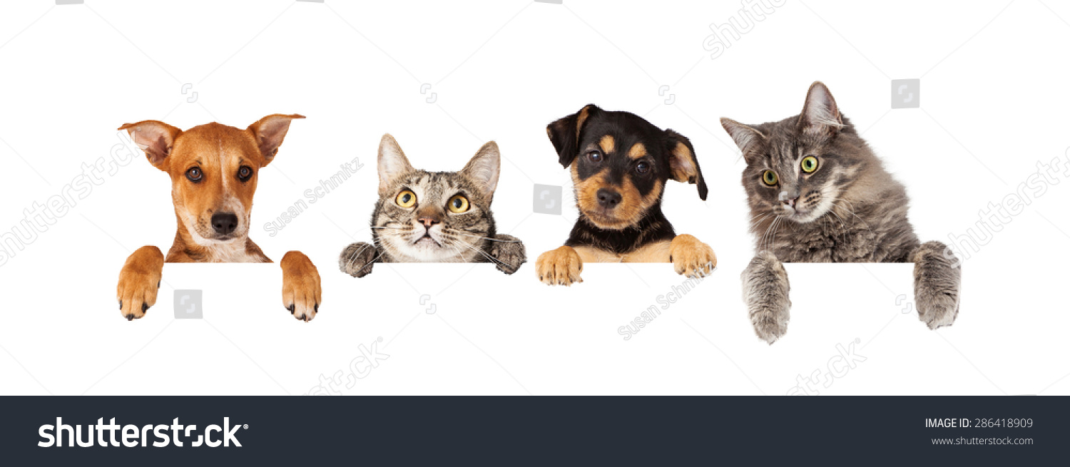Row Of Cats Dogs Free Clipart