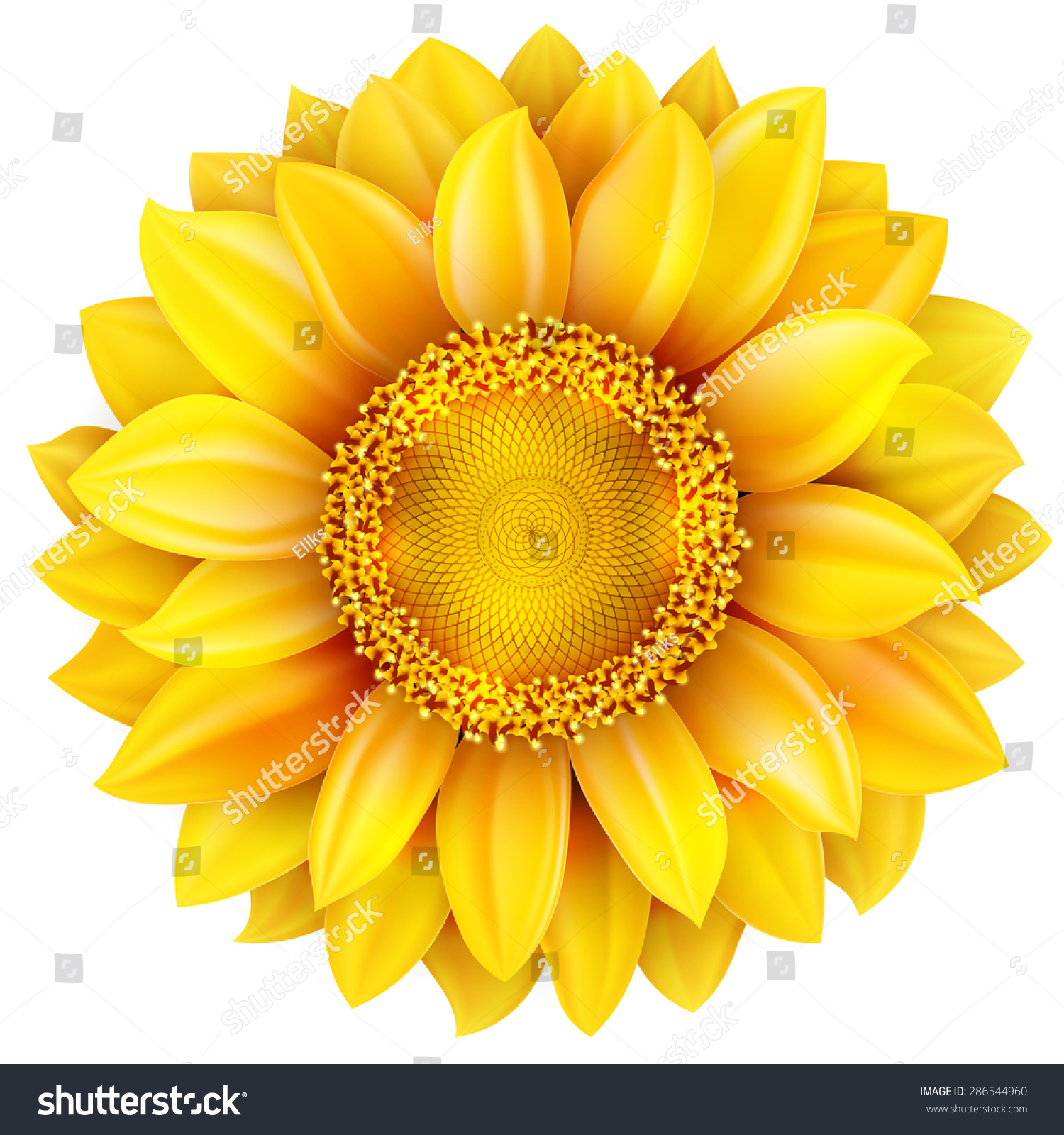 sunflower  high quality   eps 10 vector file included