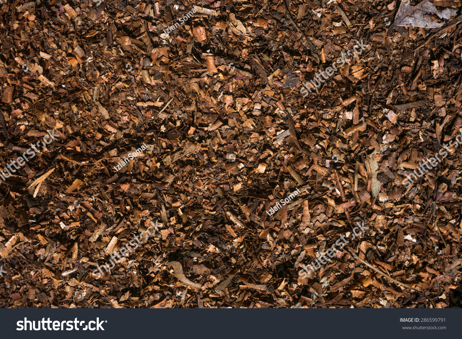Royalty Free Fresh Wet Wood Chip From Alder Tree 286599791 Stock