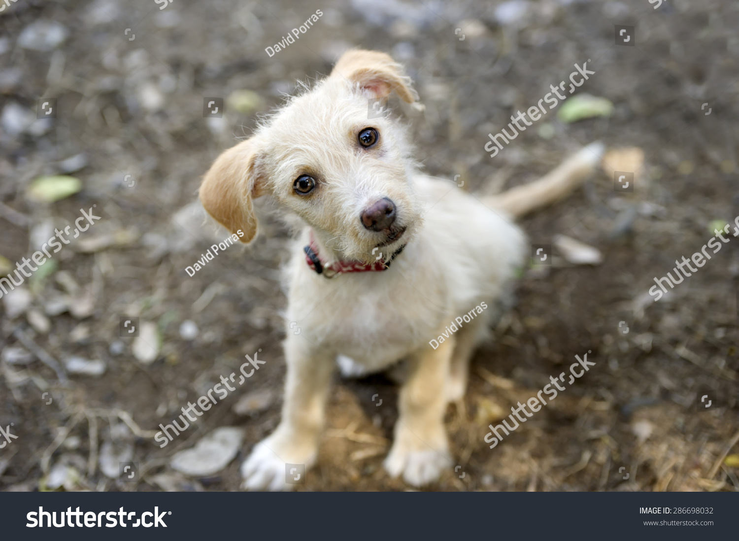 Curious Dog Looking Adorable Face Cute Stock