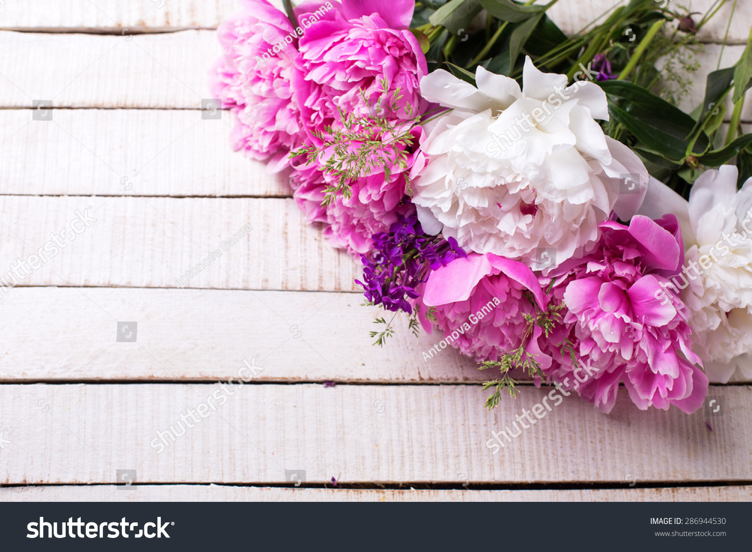 Fresh Pink White Peonies Flowers On Stock Photo Royalty Free