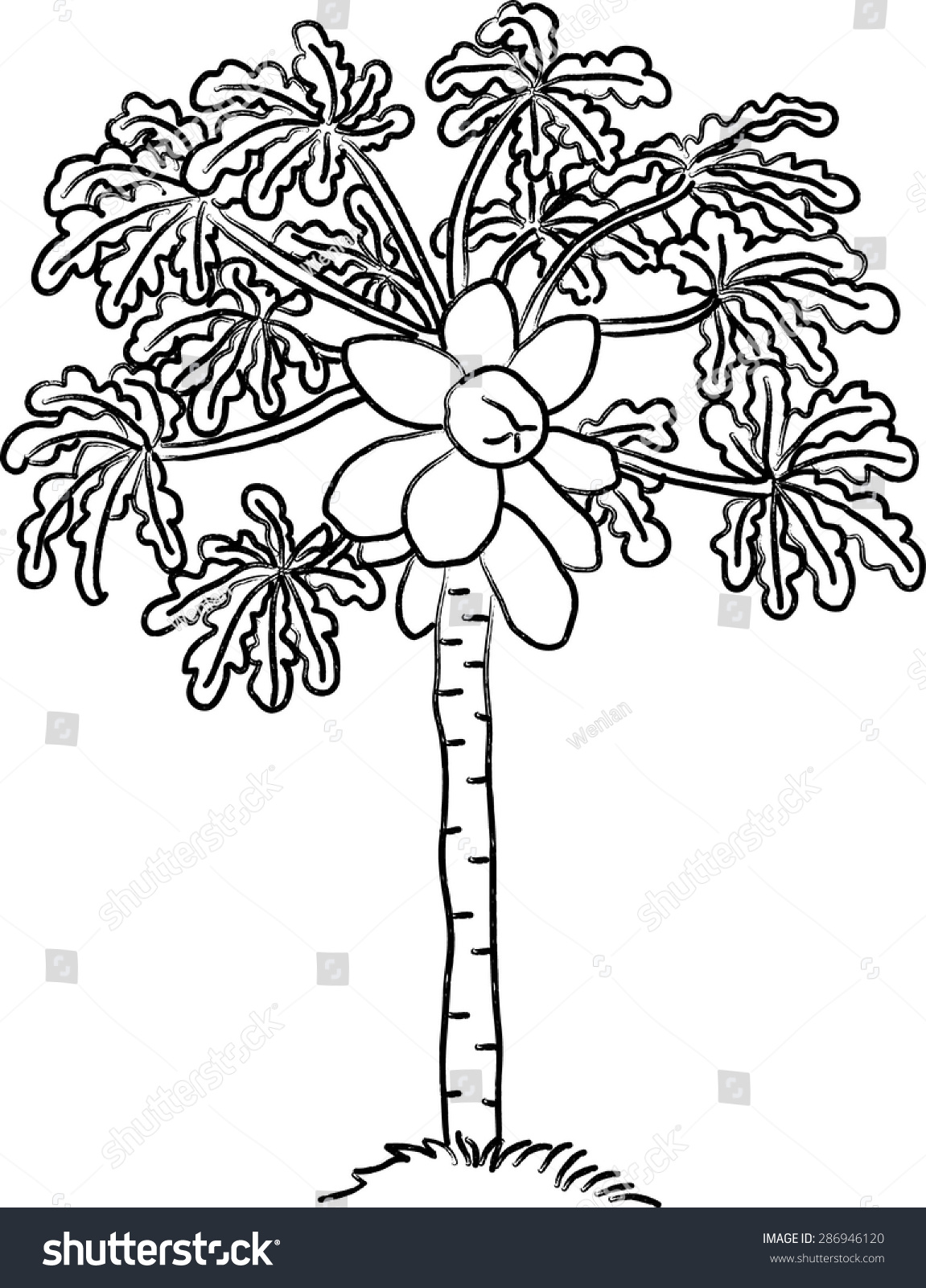 Papaya Tree Stock Vector 286946120