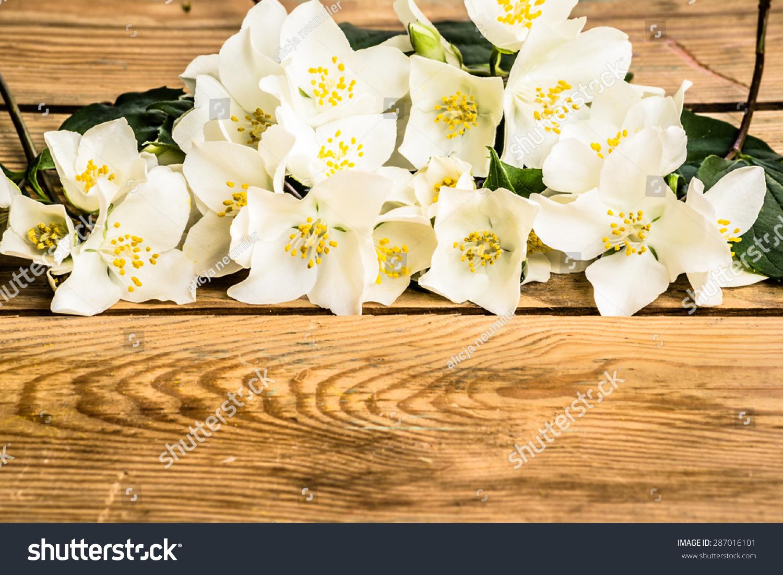 Jasmine flowers on wood background beautiful stock photo edit now jasmine flowers on wood background beautiful arrangement of flowers located on aged wooden planks vintage izmirmasajfo