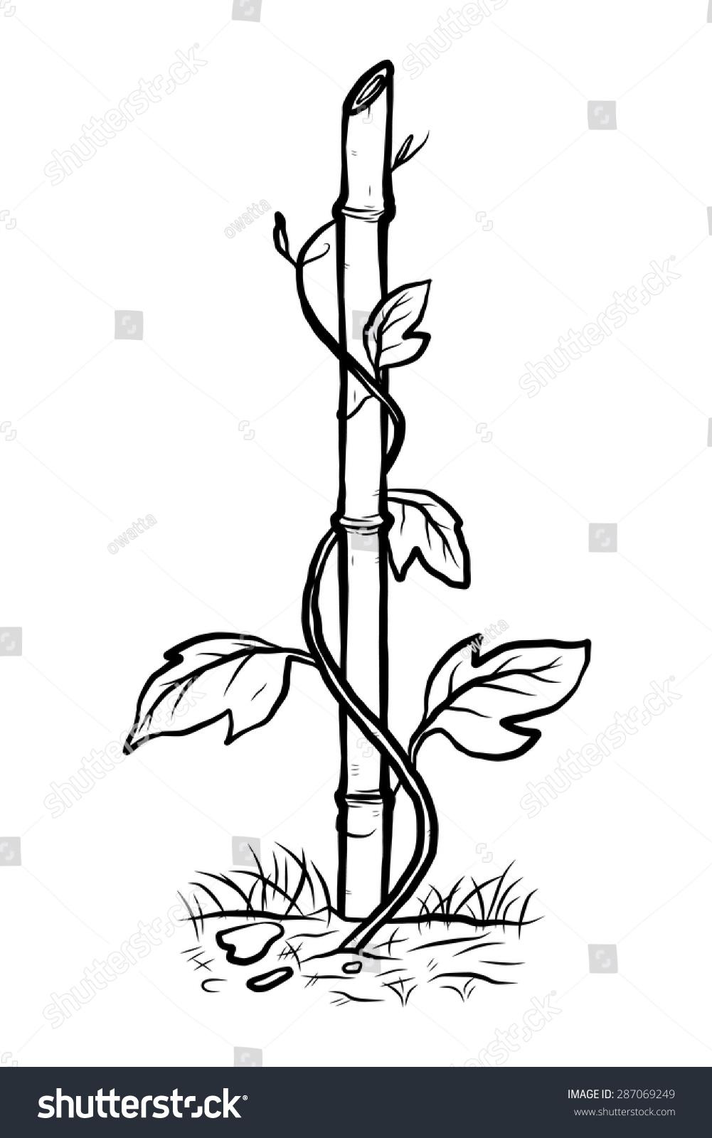 climbing plant on bamboo cartoon vector stock vector 287069249