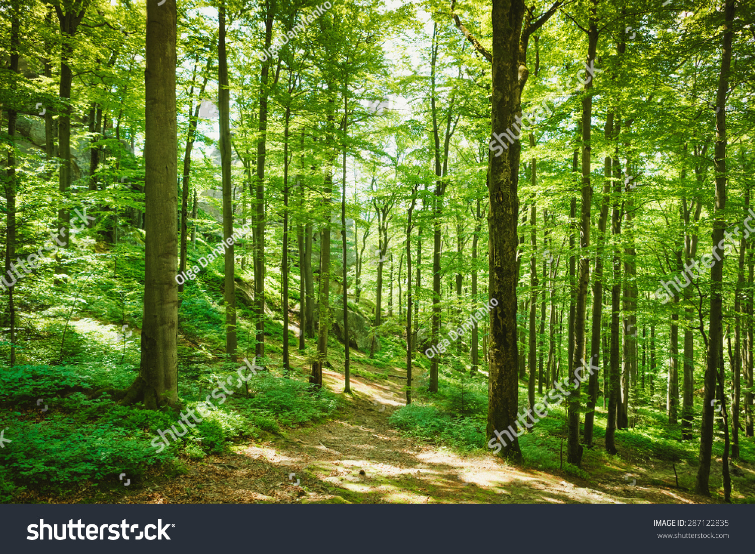 Forest trees. nature green wood sunlight backgrounds #287122835