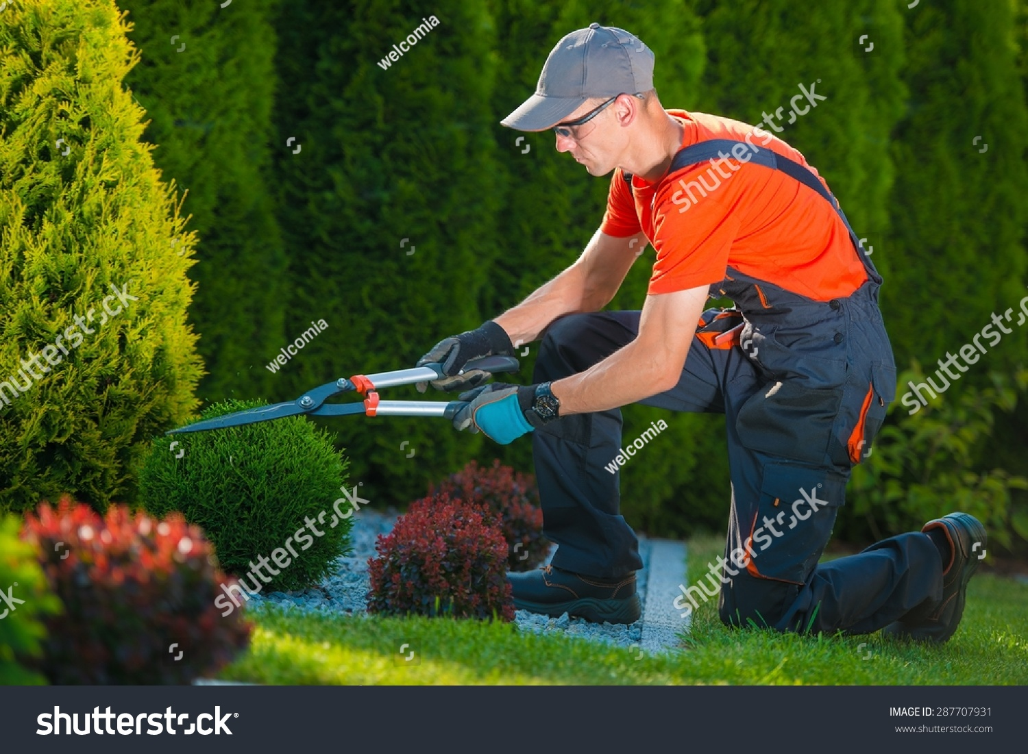 Professional Gardener At Work Gardener Trimming Garden
