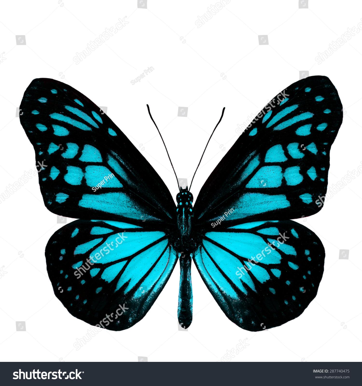 Beautiful Light Blue Bedrooms: Most Beautiful Light Blue Butterfly Fancy Stock Photo