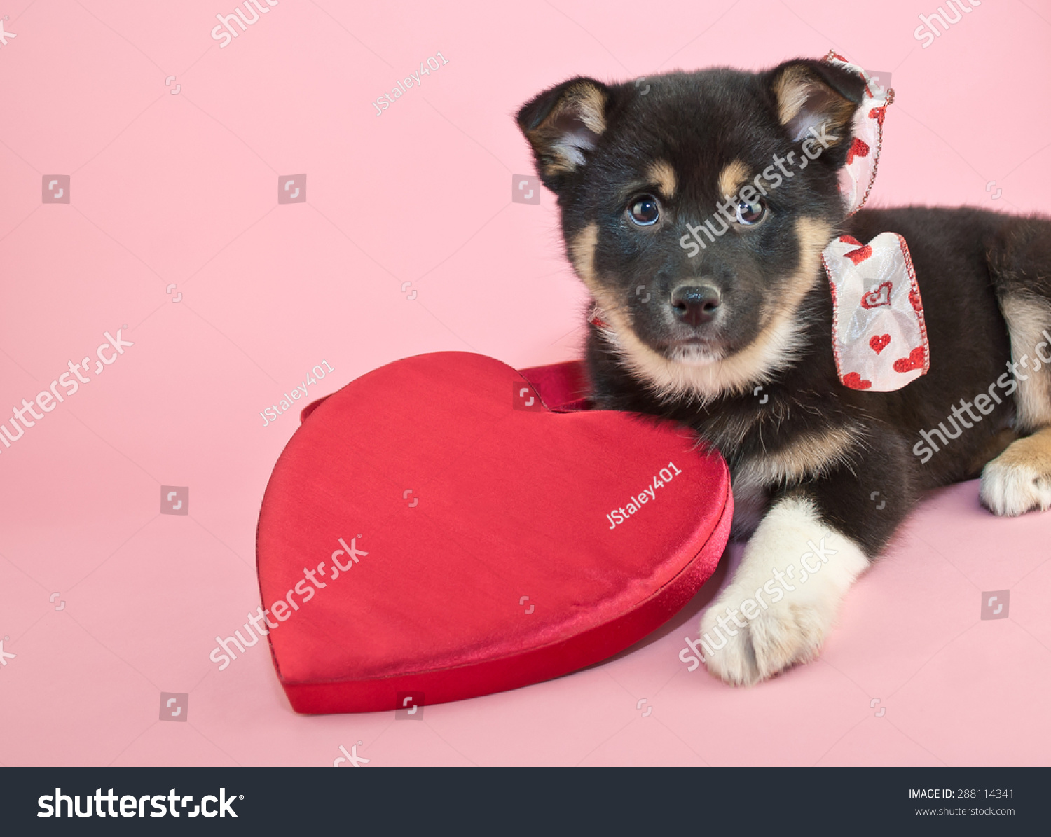 Very Cute Puppy Laying Pink Stock Shutterstock