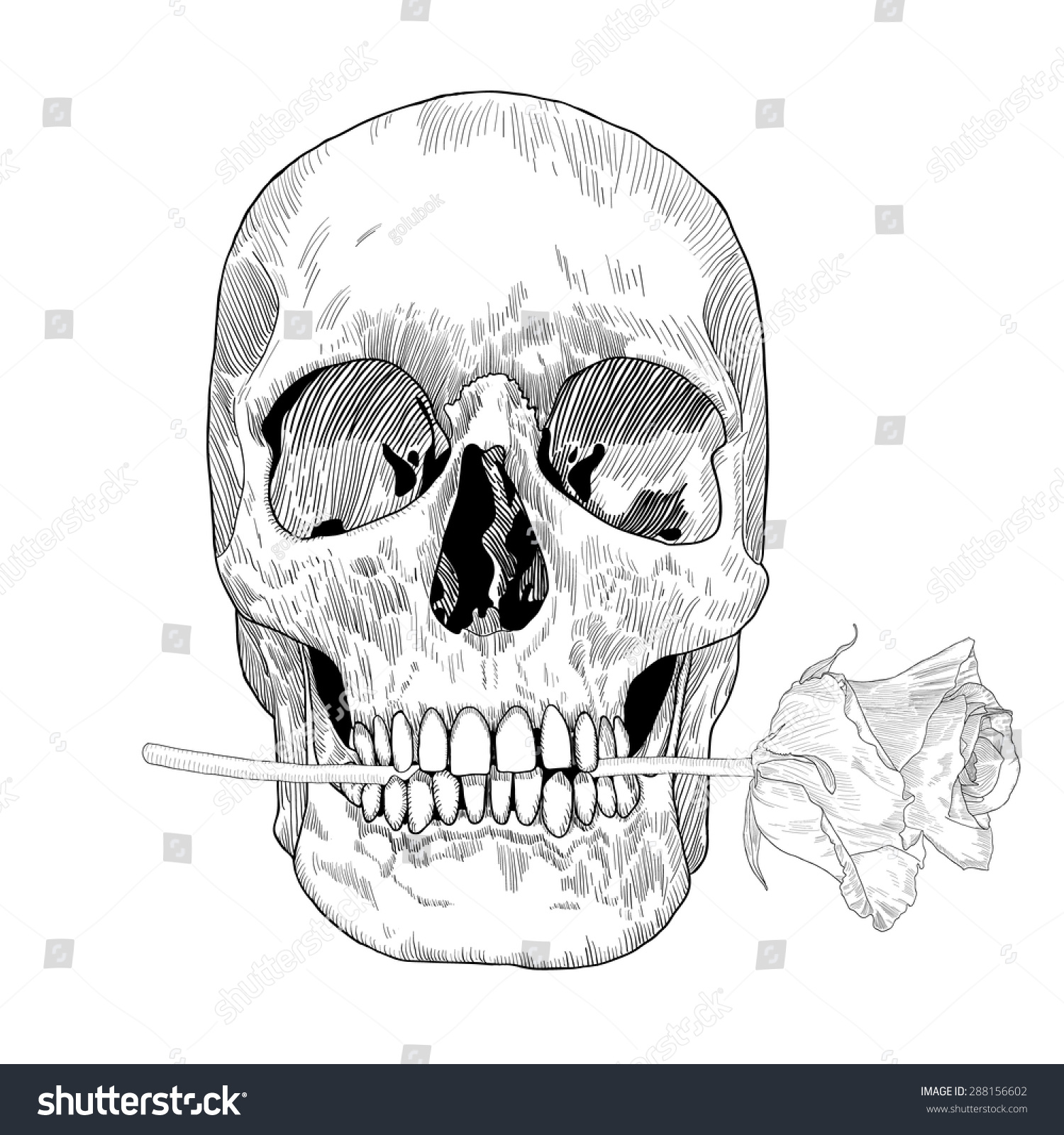 Skull holding rose his mouth vector stock vector 288156602 for Hand holding a rose drawing
