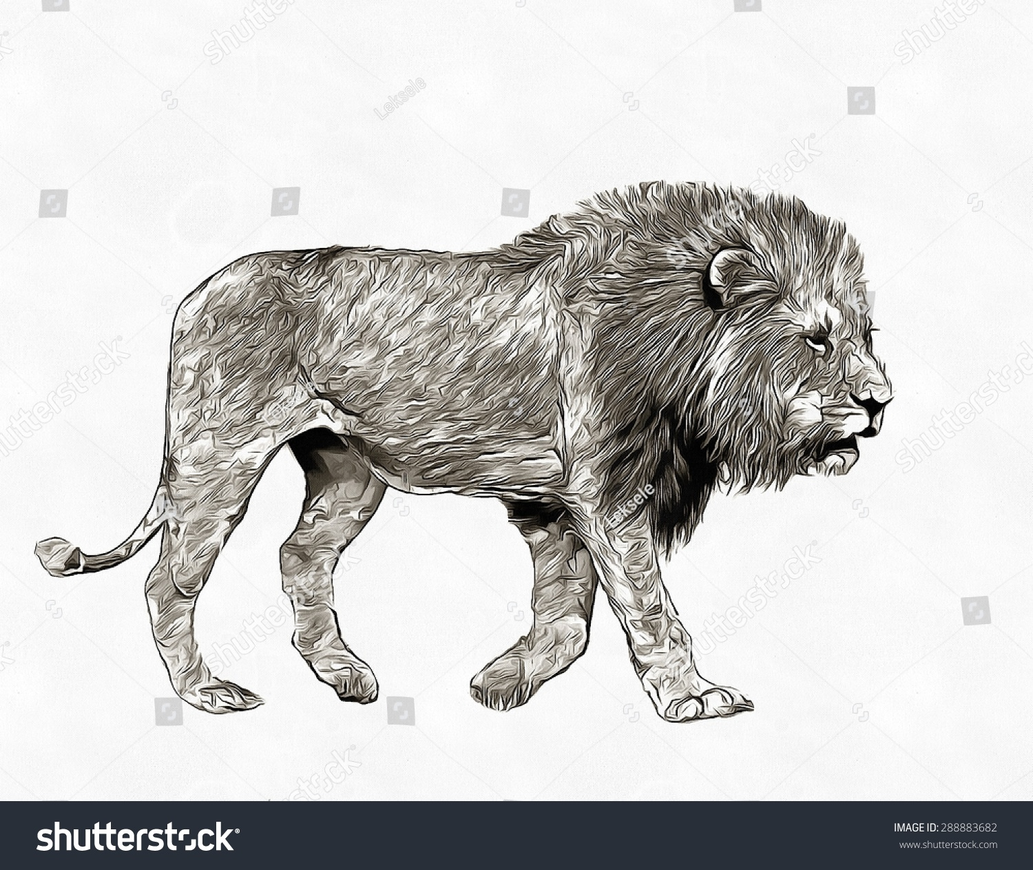 Royalty free pencil sketch lion in savannah 288883682 stock photo