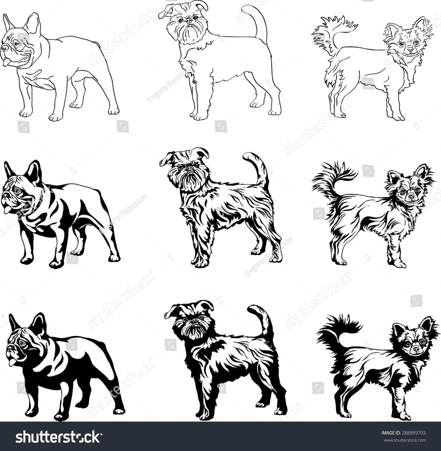 Dogs English Bulldog Brussels Griffon Chihuahua Stock-Vektorgrafik ...