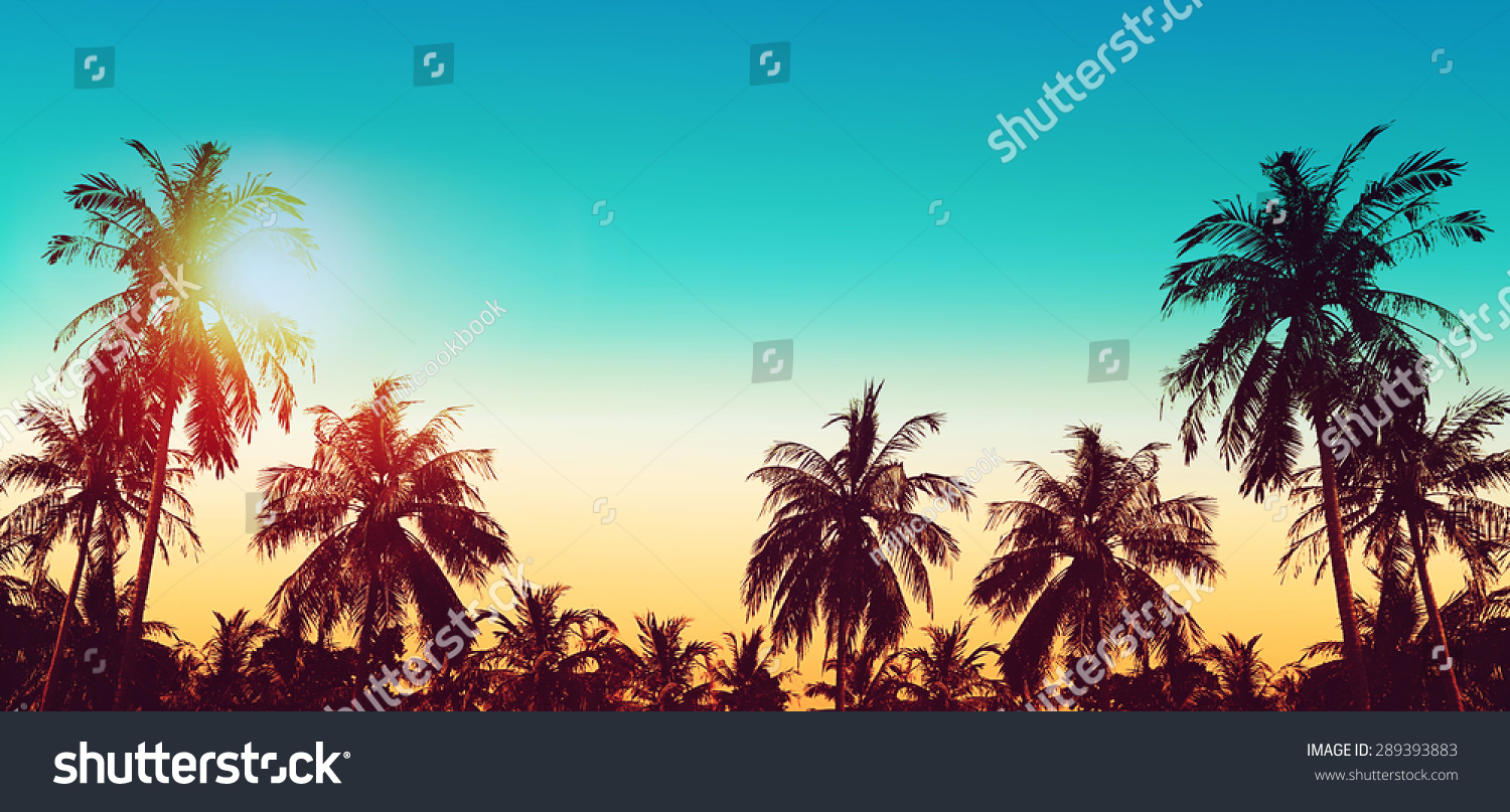 tropical paradise design banner background coconut stock photo (safe