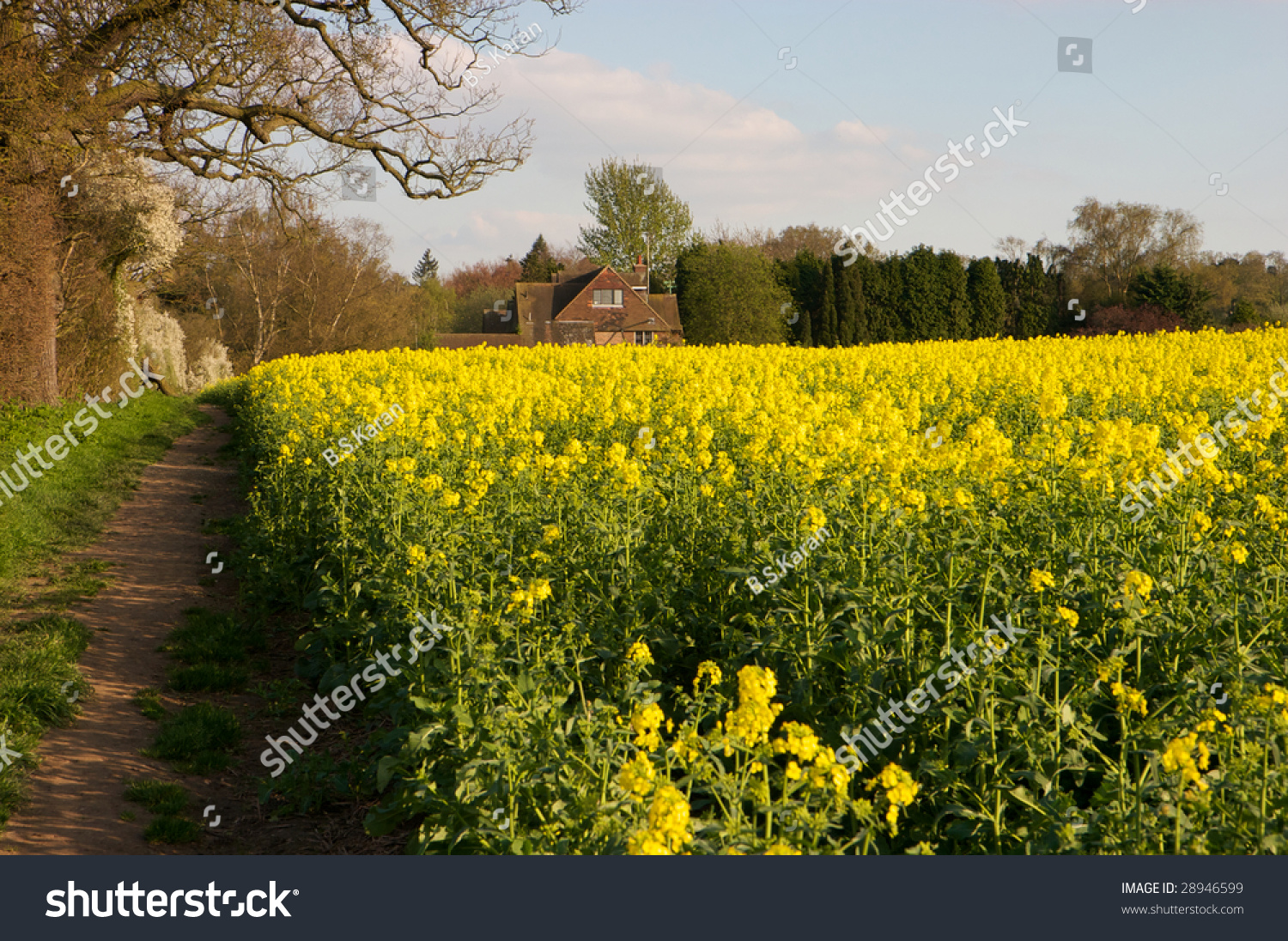 Spring Fields England Countryside Stock Photo Edit Now 28946599