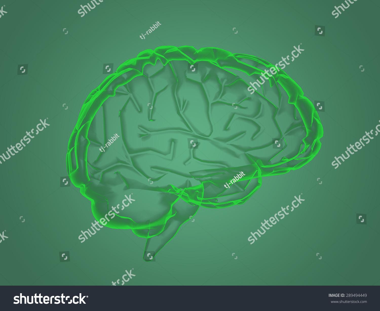 Xray Brain Anatomy Stock Illustration 289494449 - Shutterstock