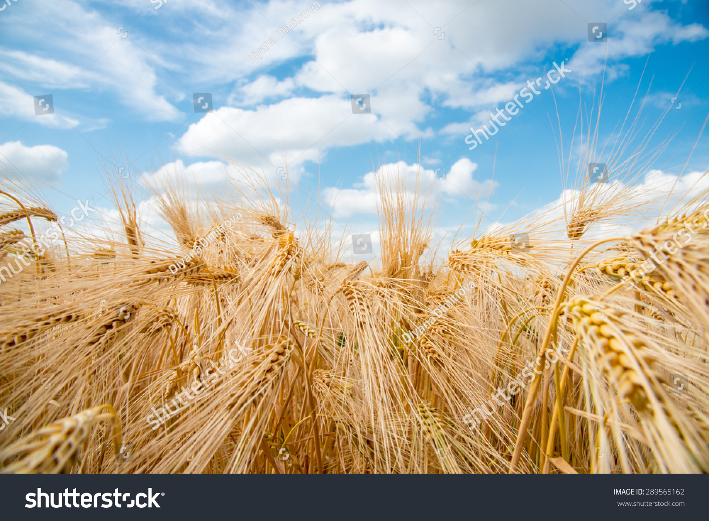 how to make barley flour bread