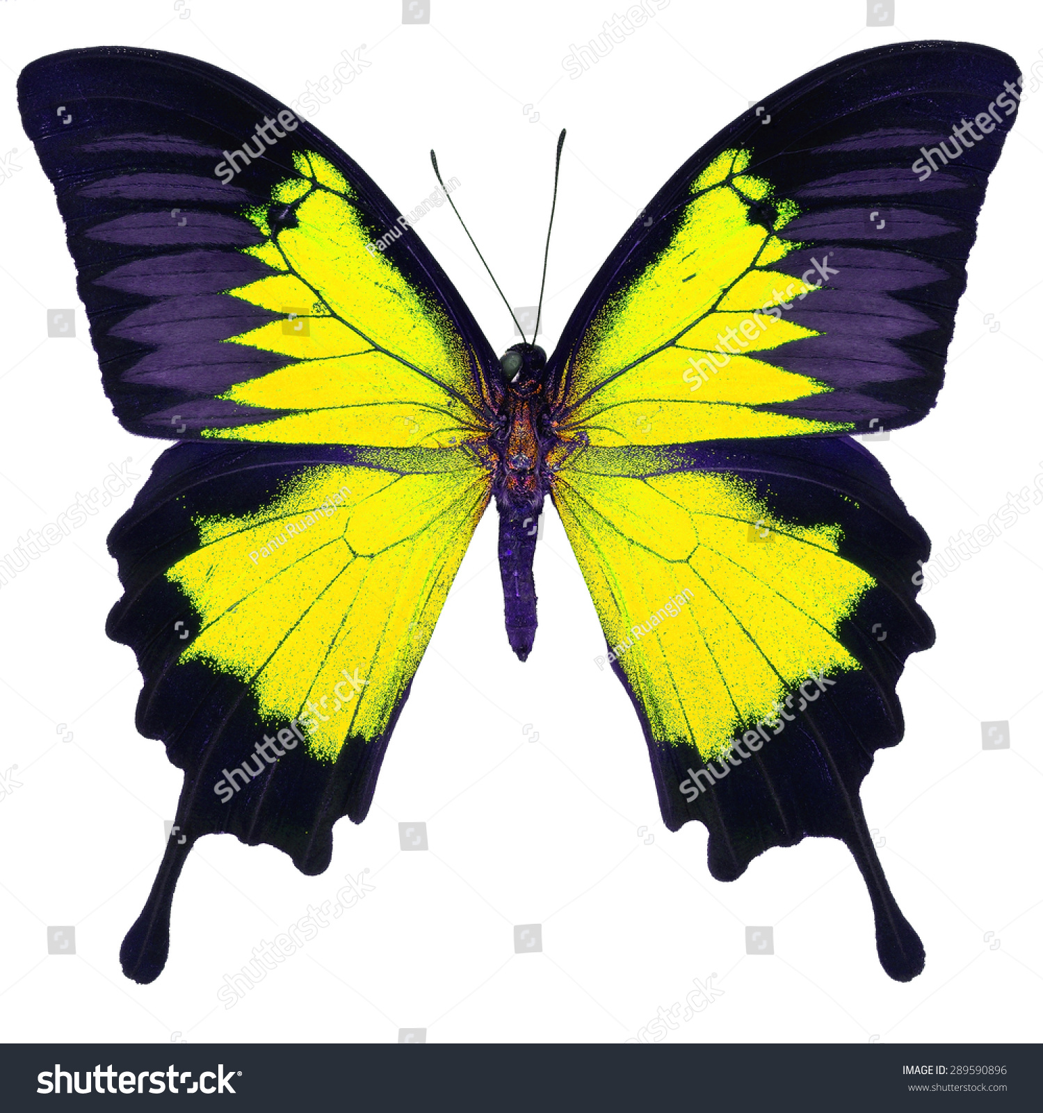 butterfly on yellow color - photo #37