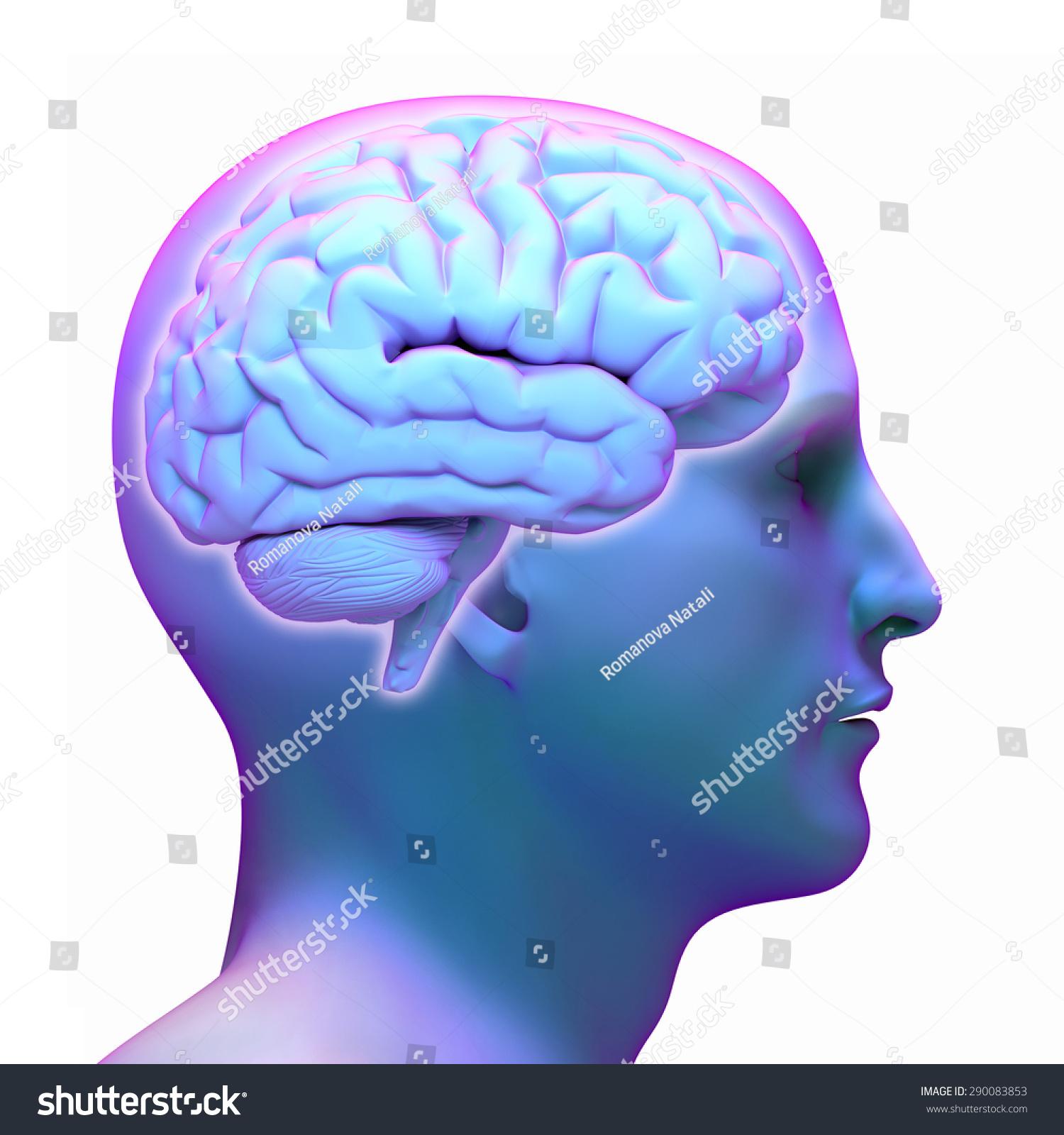 Brain Diagram Human Head On White Stock Illustration Royalty Free