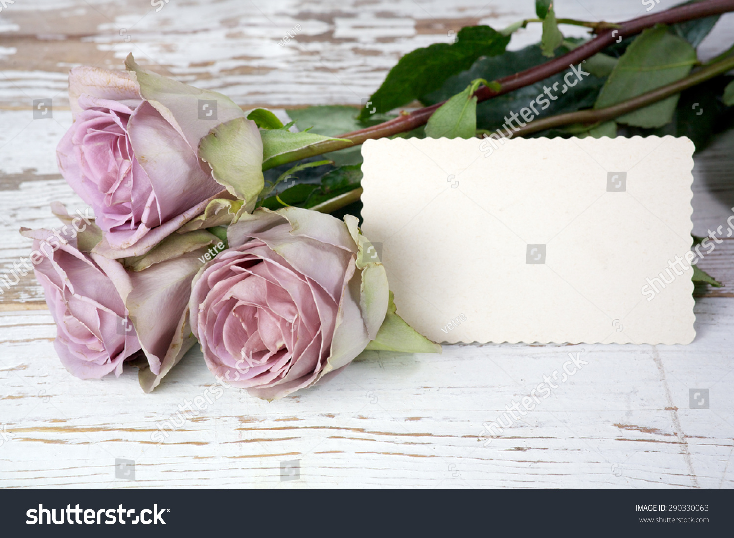 Purple Roses Bouquet Blank Greeting Card Stock Photo Edit Now