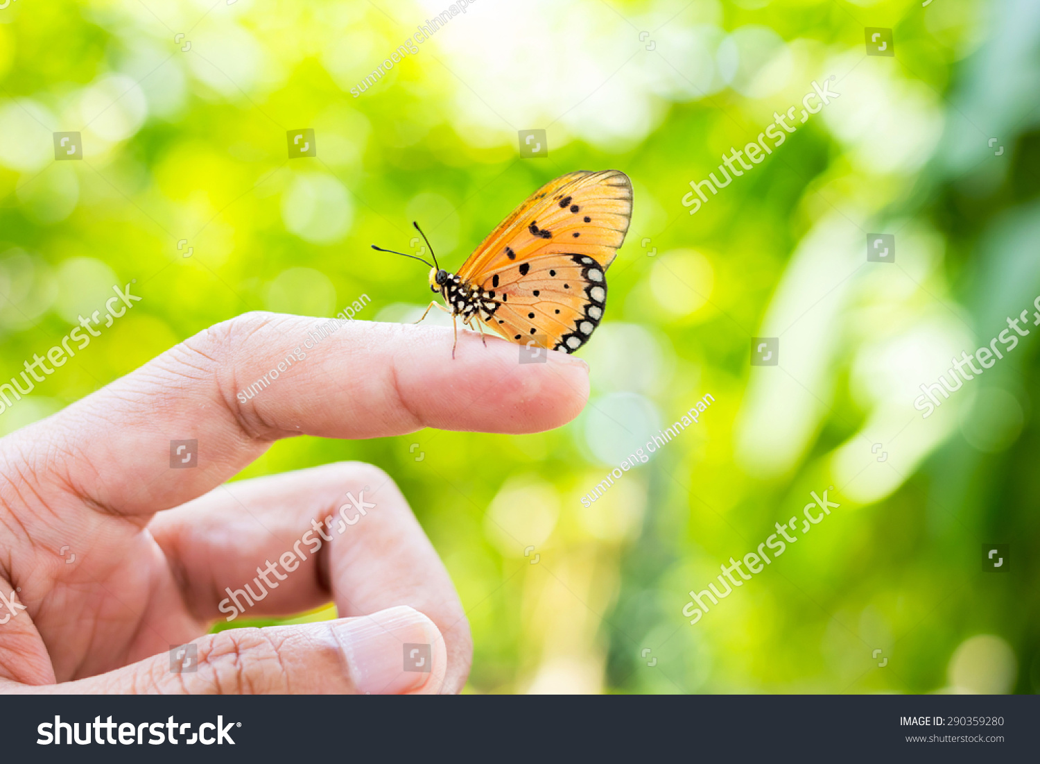 Uncategorized Butterfly Hand beautiful butterfly sitting on hand stock photo 290359280 hand