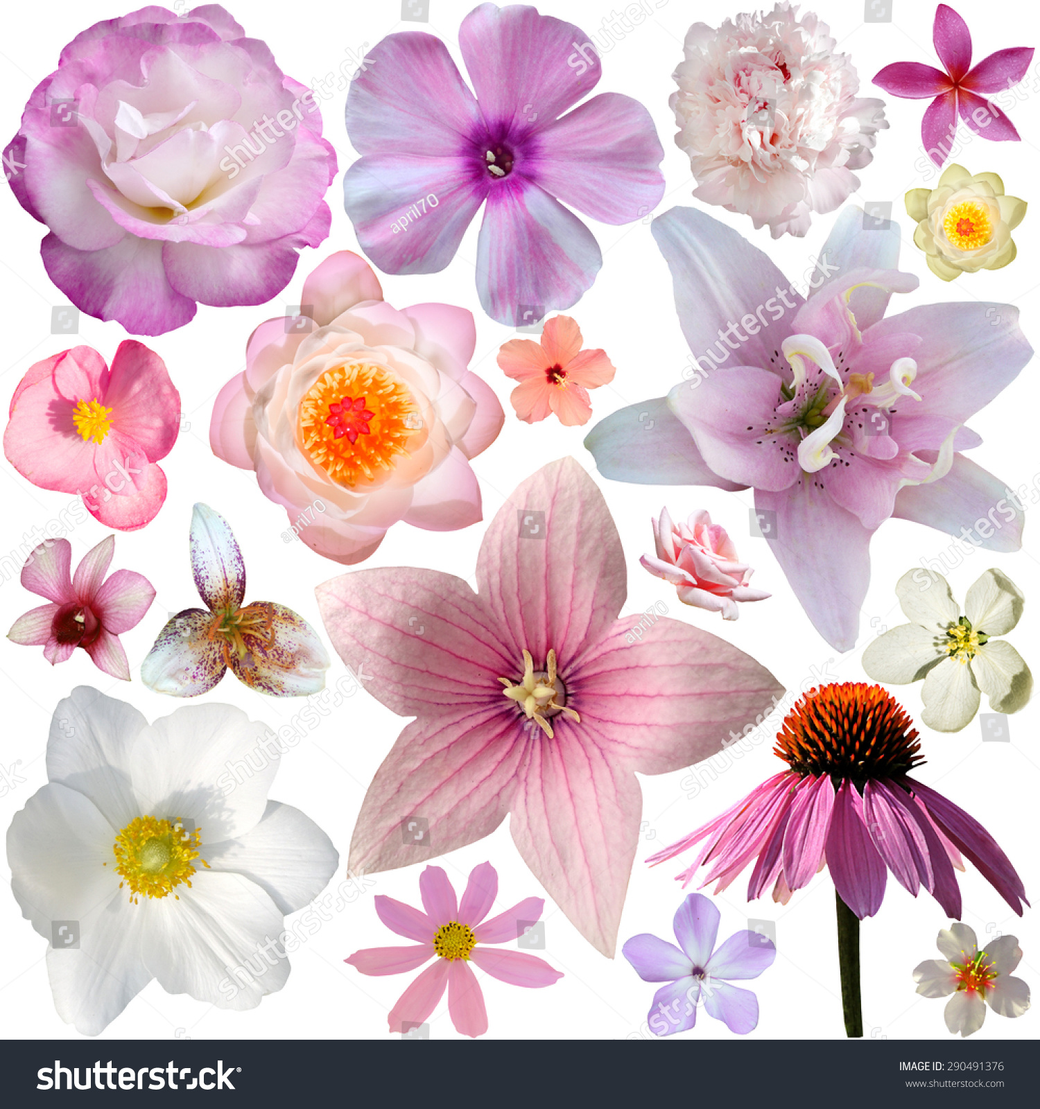 Collection Pink Summer Flowers Isolated On Stock Photo Edit Now