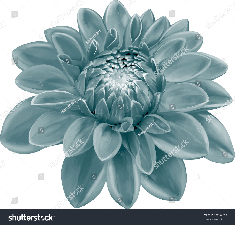 Dark Green Blue Colored Dahlia Flower Stock Vector 291226808