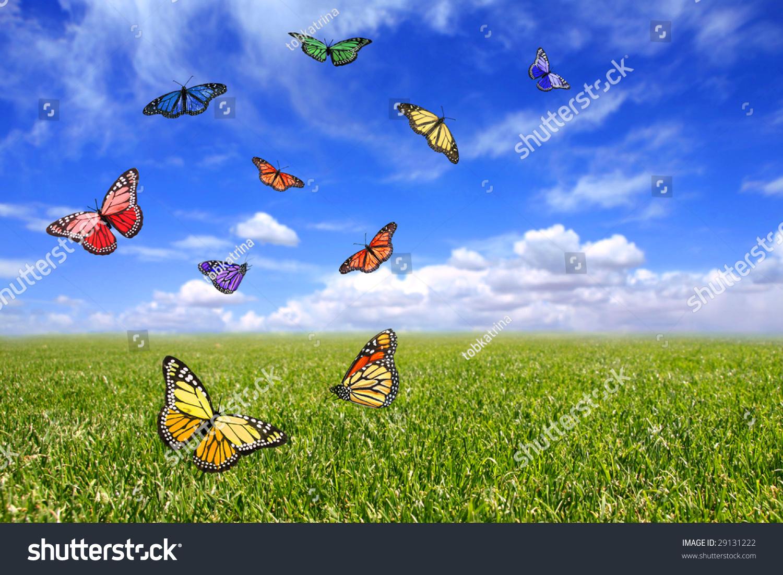 beautiful butterflies flying free open field stock photo 29131222