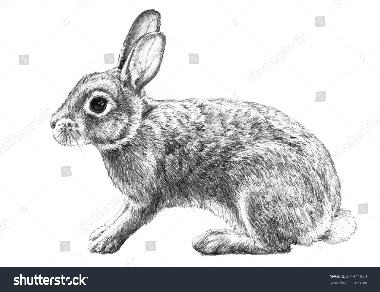 Realistic rabbit illustration - photo#7