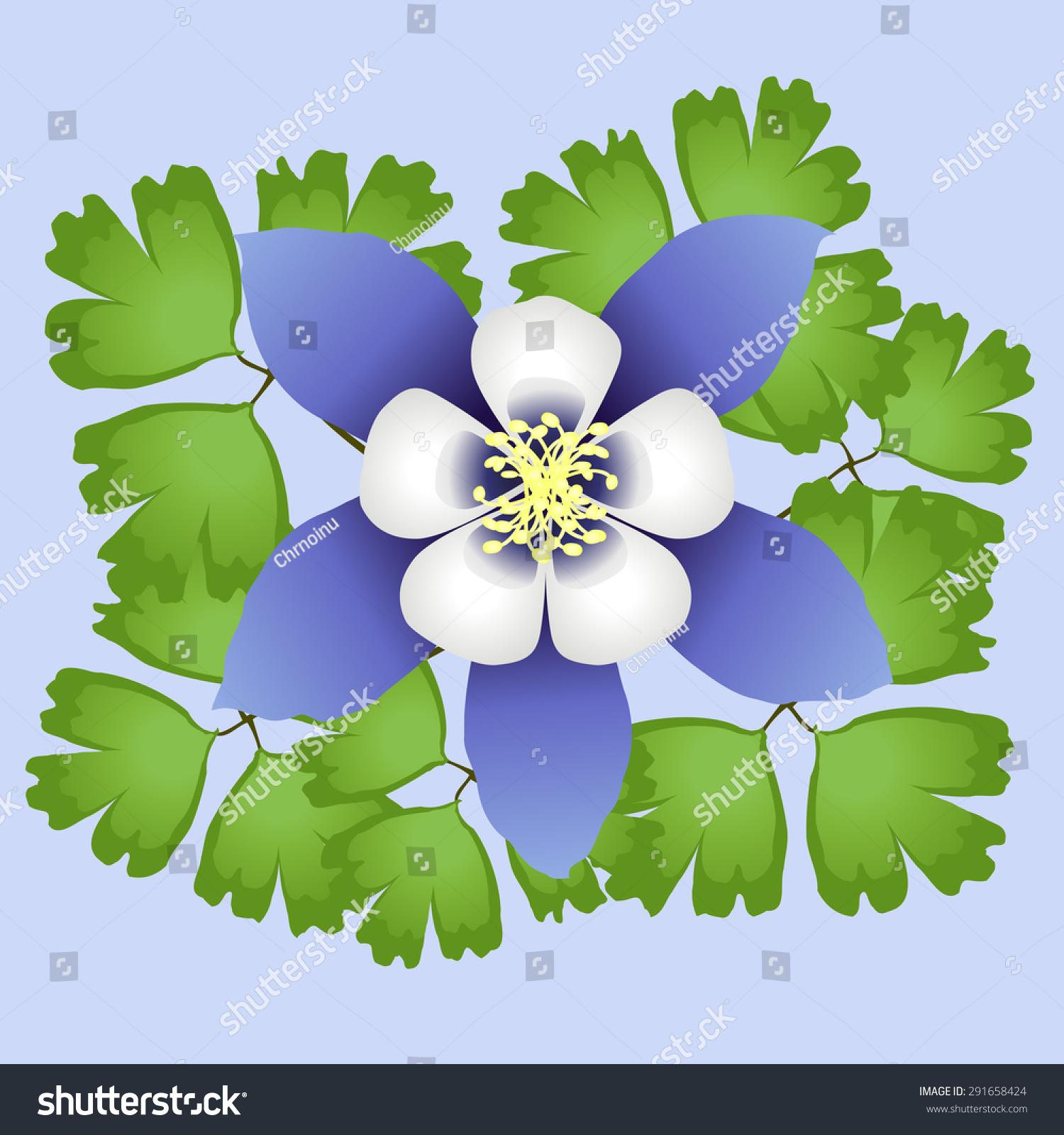 Colorado Blue Columbine Flower Stock Vector Royalty Free 291658424