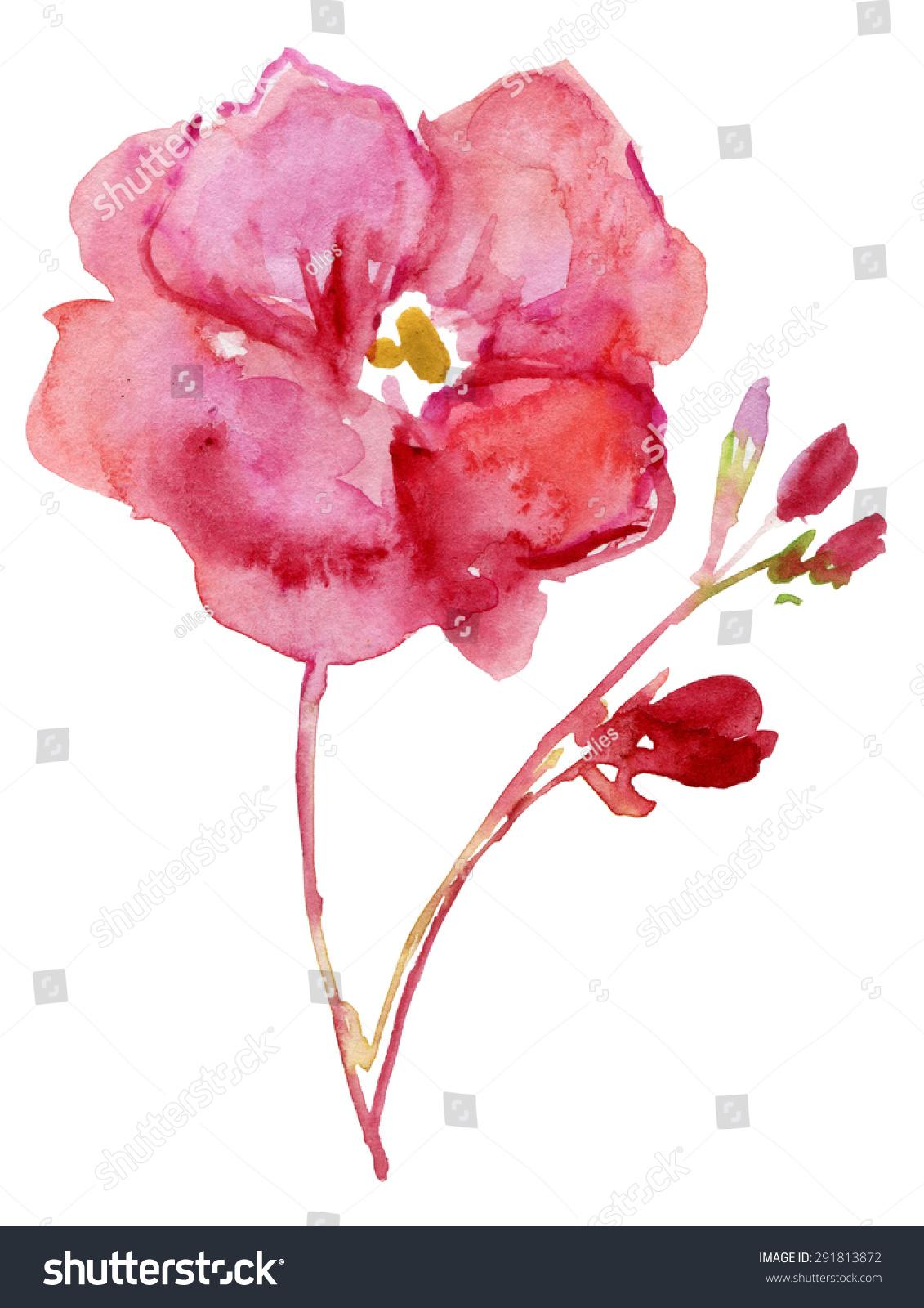 Watercolor Oleander Flowers Nerium Oleander Apocynaceae Stock
